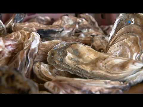 Les huîtres de Cancale candidates au patrimoine culturel immatériel de l'UNESCO [Vidéo]