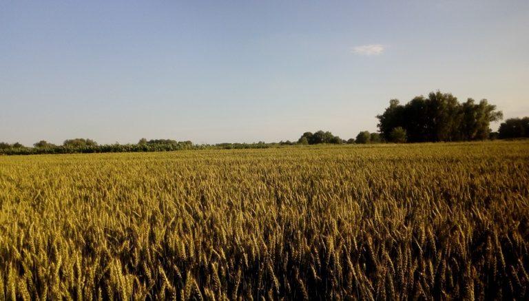 Quelle est l'importance du Morbihan (56) dans l'industrie agroalimentaire française?