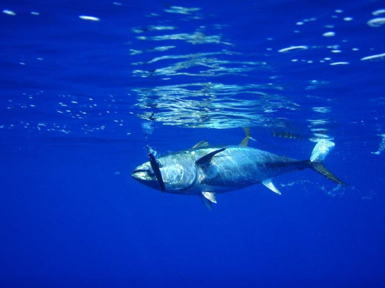 Réchauffement des océans. Bientôt plus de poisson dans vos assiettes ?