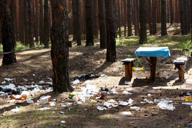 Déchets en forêt. Comment préserver votre environnement ?