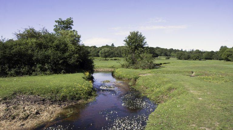 Environnement. Nos rivières sont polluées par des pesticides