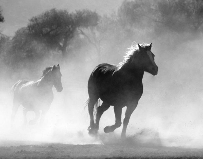 Quels barbares mutilent donc les chevaux en France?