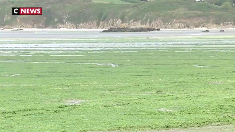 Bretagne. Les algues vertes sont de retour [Vidéo]