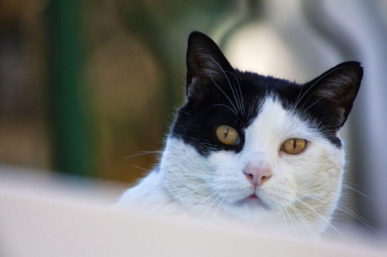 Reconfinement : Des associations de protection animale demandent au Gouvernement que les adoptions d'animaux et le nourrissage des chats libres restent possibles