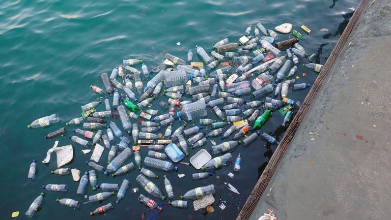 Environnement. La journée mondiale des océans, et après ?