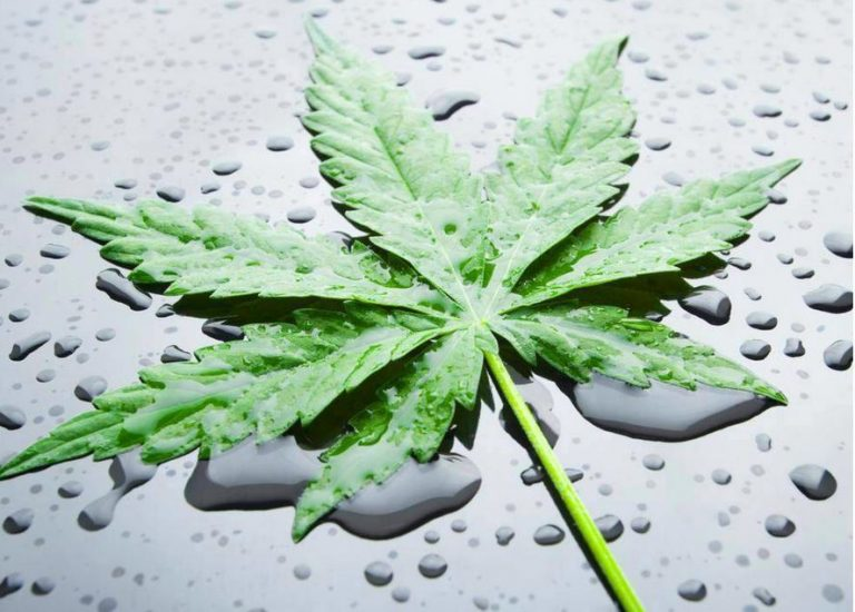 Cannabis: une drogue destructrice bientôt légalisée en France?