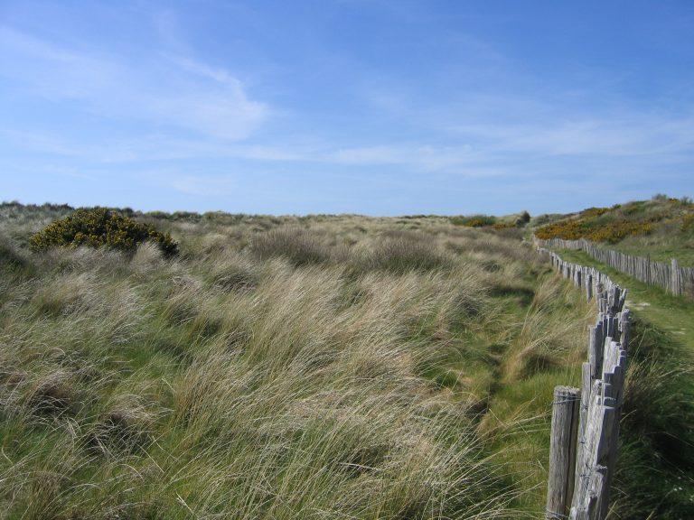 Tourisme et plage. Chacun peut contribuer à préserver les Dunes domaniales en Bretagne