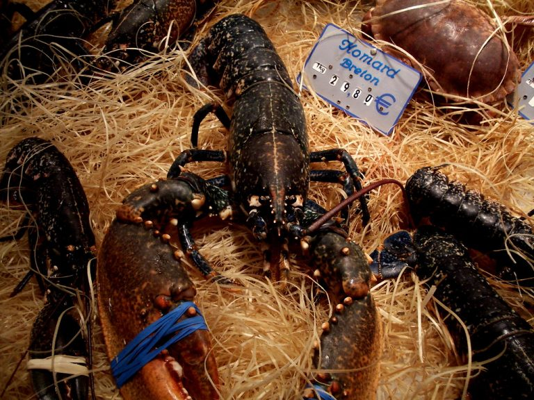 Création de l'association de défense optimale du homard armoricain (D.O.H.A)