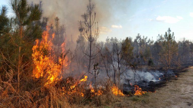 Incendies, Feux de forêt. Comment les prévenir ?