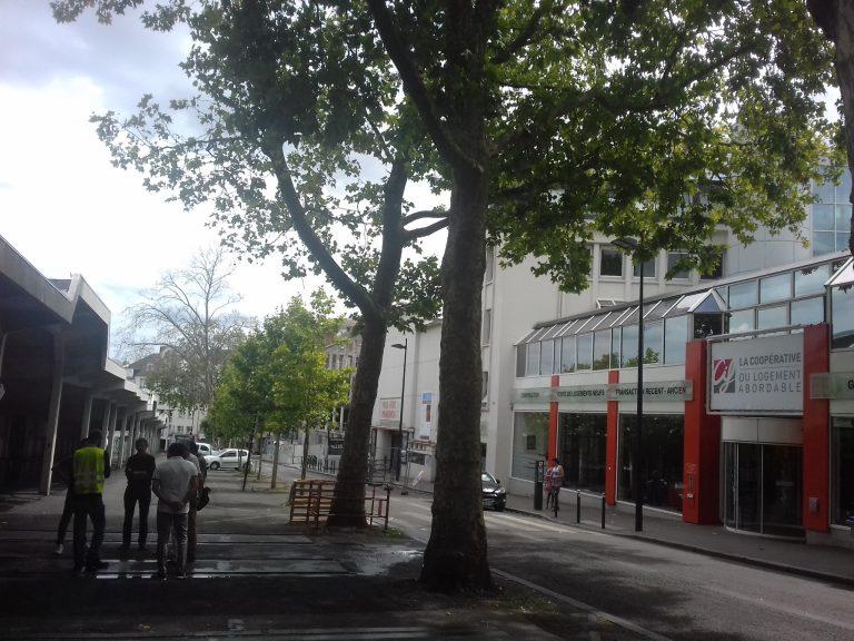 NantesTalensac. Abattage des platanes de la rue Basse-Porte cette semaine, la rue fermée