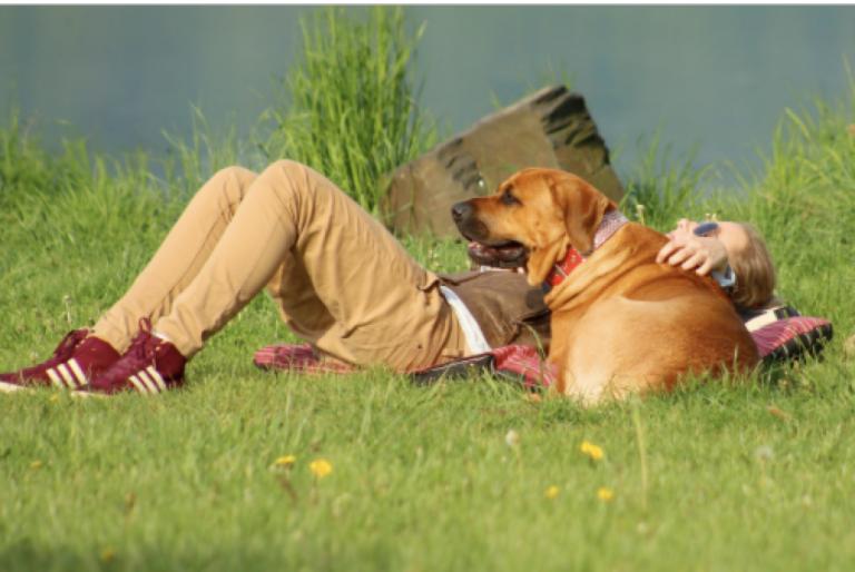 La Bretagne région la plus accueillante pour les animaux en vacances ?