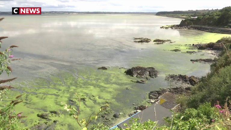 Algues vertes : une catastrophe qui s'éternise [Vidéo]