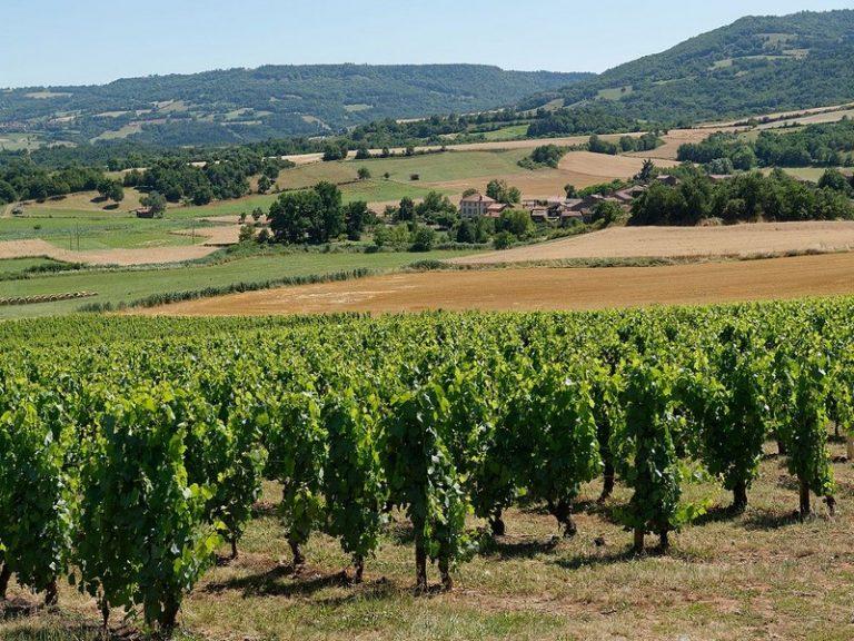 Le réveil des vins d'Auvergne
