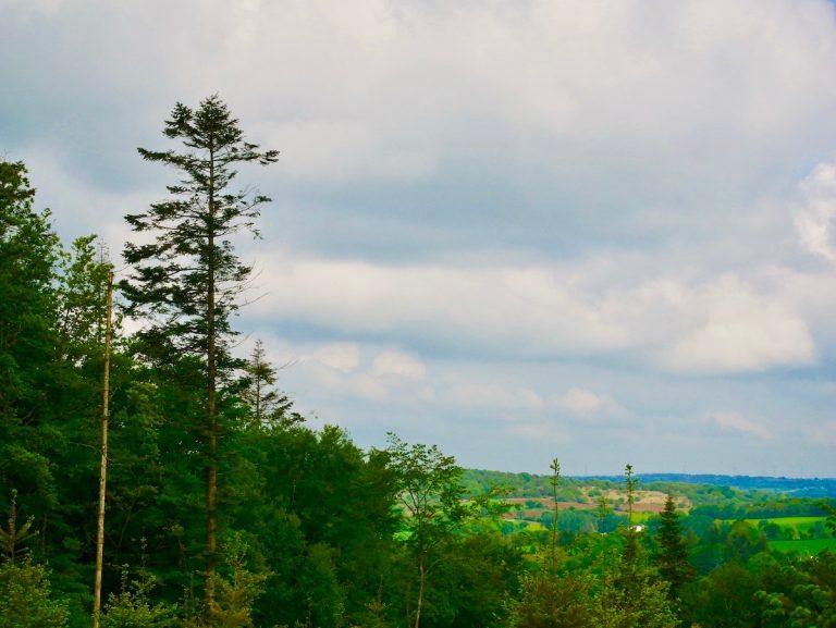 Concours de l'été, envoyez-nous votre plus belle photographie de forêt !