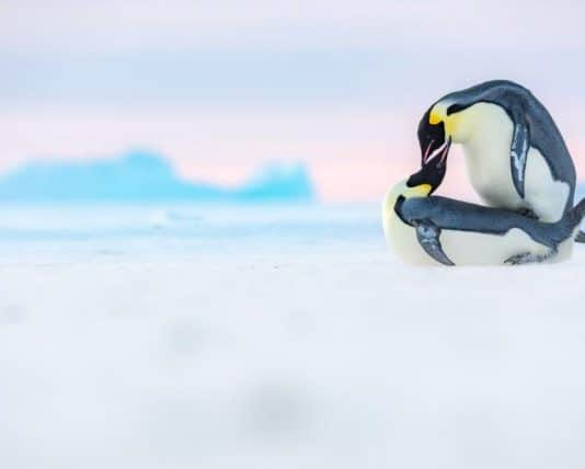 pingouins_photos
