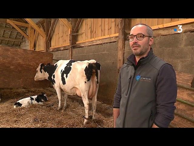 De plus en plus d'éleveurs soignent leurs bêtes avec des plantes [Vidéo]