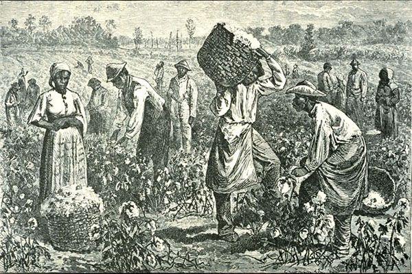 Agriculture. Malgré un taux de chômage important, la communauté de communes du Kreiz Breizh veut embaucher des migrants