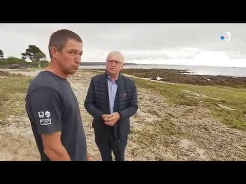 Algues vertes en Bretagne : Une seconde chance ? [Vidéo]