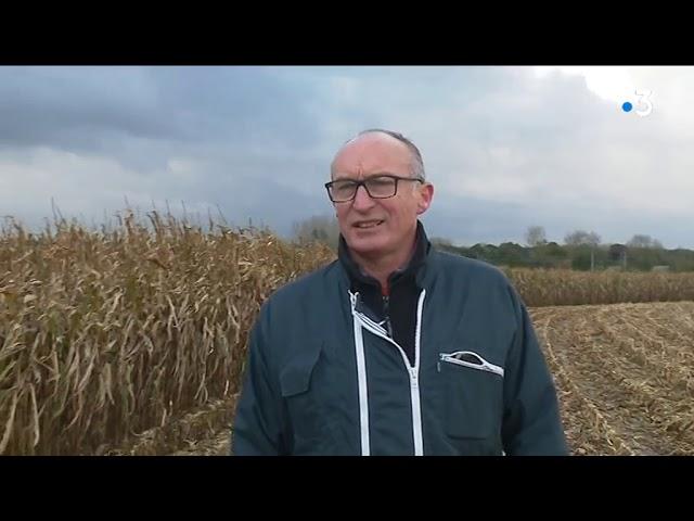 Pluies en Bretagne : des précipitations qui n'arrangent pas les agriculteurs [Vidéo]
