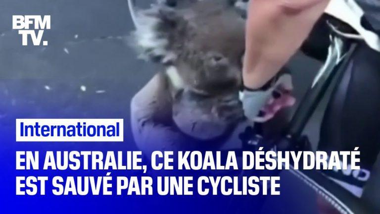 En Australie, un cycliste s'arrête pour hydrater un koala [Vidéo]