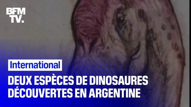 Deux nouvelles espèces de dinosaures ont été découvertes en Argentine [Vidéo]