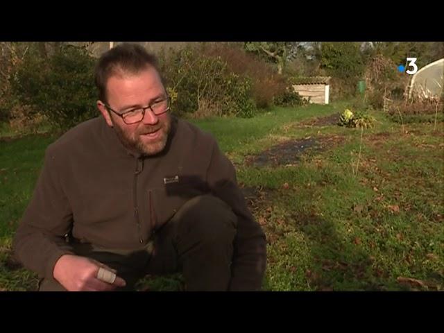 Des sapins de Noël bios produits dans le Finistère