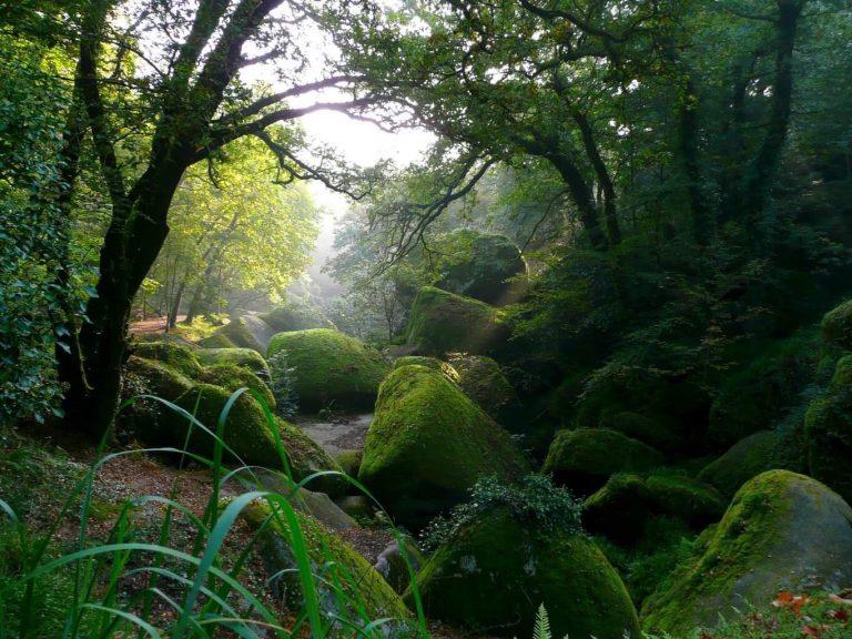Antik'Arrée. Ils veulent planter des arbres pour reformer la forêt du Kreiz-Breizh [Interview]