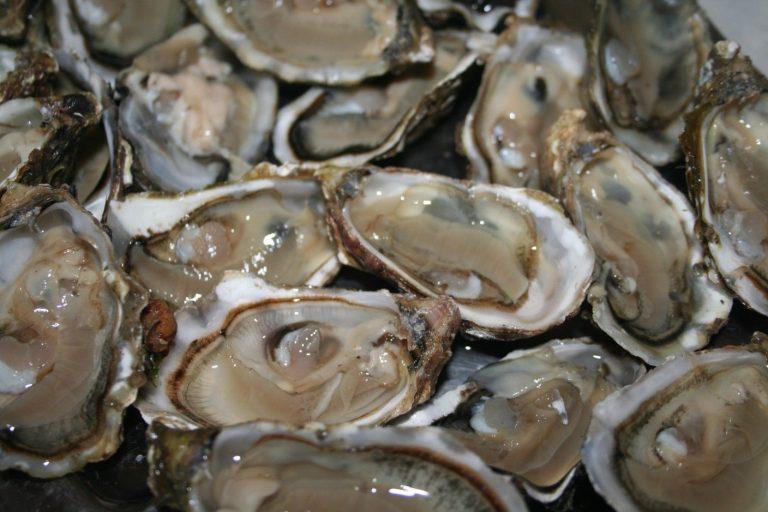 Huîtres contaminées en Bretagne : d'où vient le virus ?