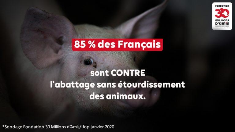 Halal, Casher… Pour 85 % des Français, il faut interdire l'abattage d'animaux conscients (L214 épingle l'abattoir Sobeval)