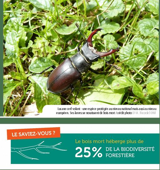 Bercé, une forêt d'exception en Mayenne, à la biodiversité exceptionnelle !