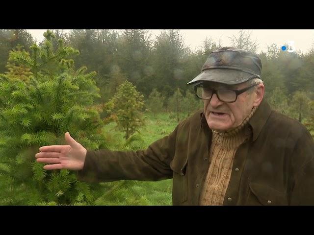 Réchauffement climatique. Les conséquences sur les forêts bretonnes