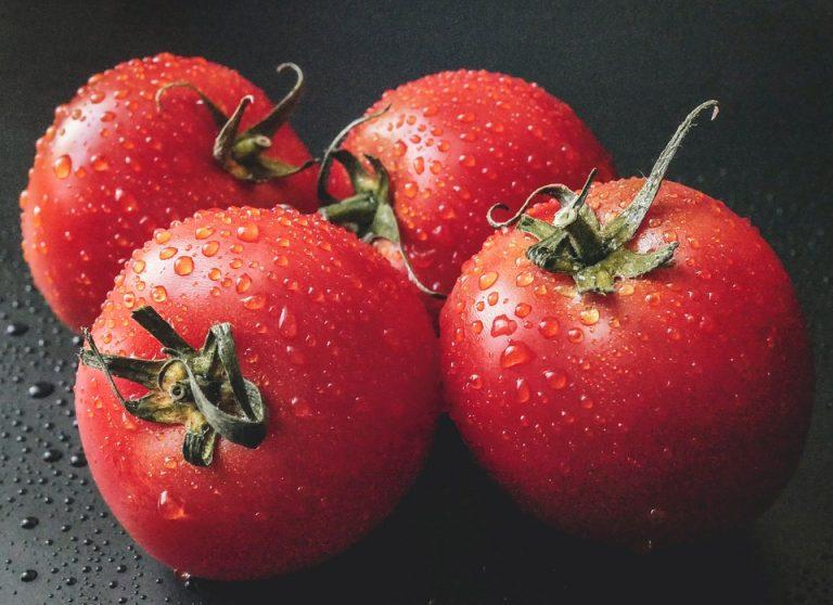 Virus de la tomate. La menace d'une propagation en France du ToBRFV