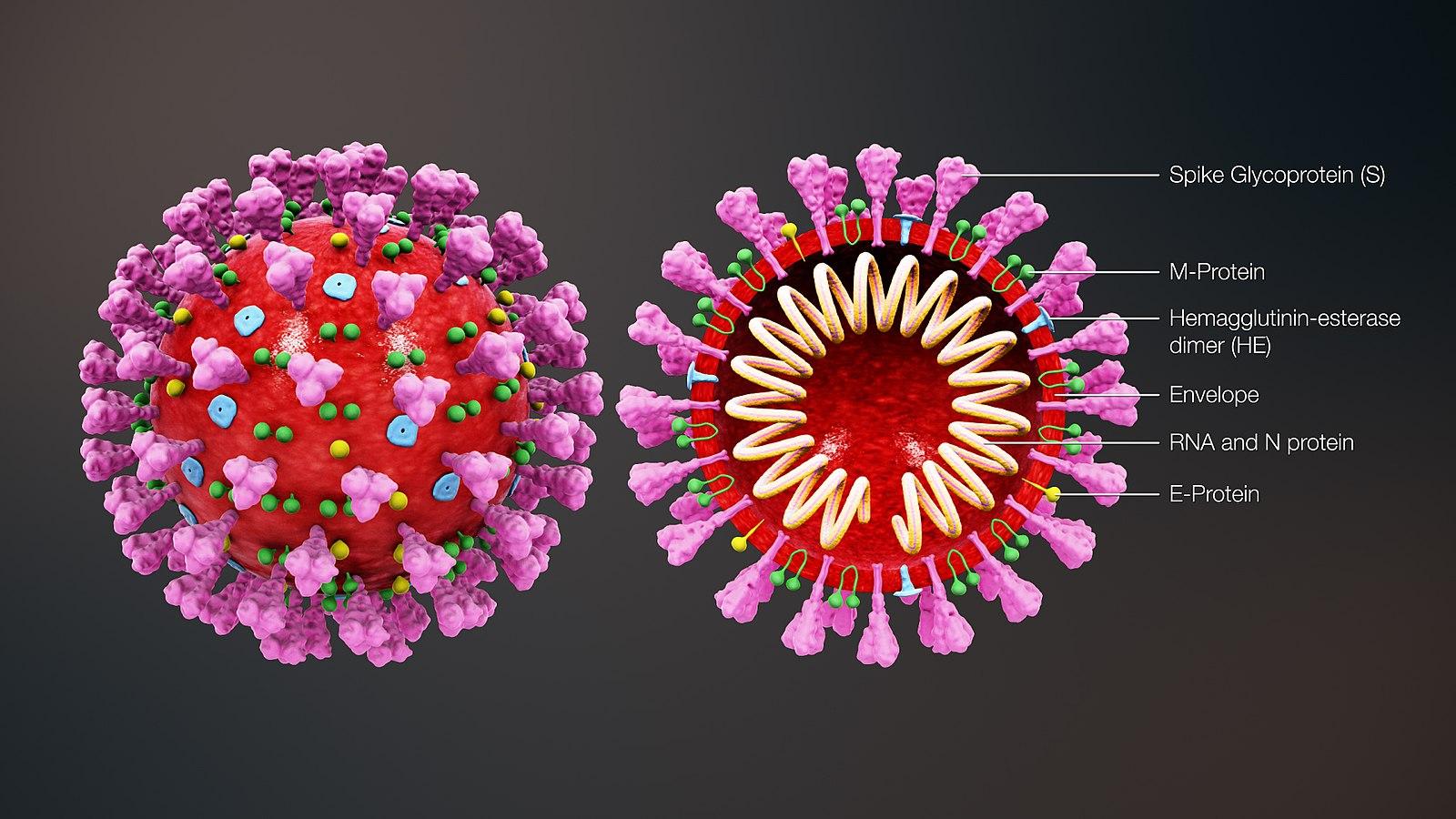 Coronavirus, Russie: après Moscou, on pense à un verrouillage dans d'autres régions. PHOTOS