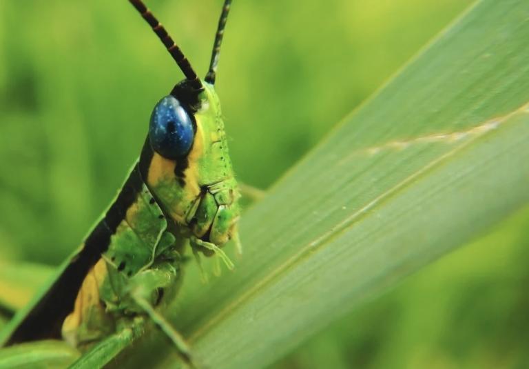 Environnement. Un safari des insectes de jardin, avec Bretagne Vivante