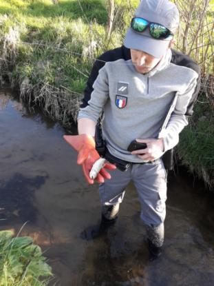 Romagne (35). Un épandage d'effluent agricole… et des dégâts environnementaux