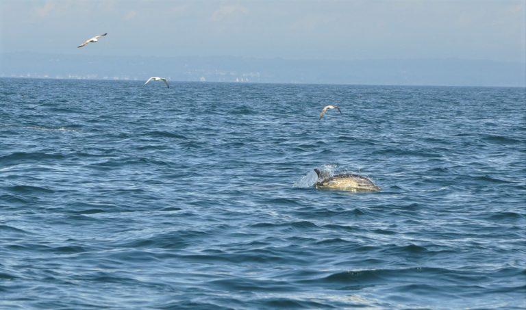Week-end de Pentecôte. Naviguez et pêchezavec précaution pour préserver la faune marine