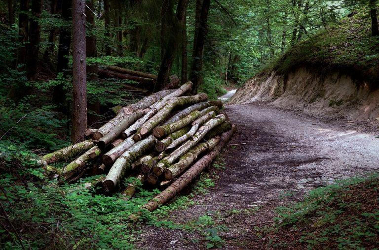 Covid-19. De l'importance de la filière bois en temps de crise sanitaire…