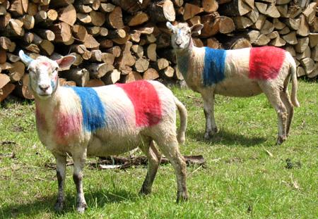 Comme du bétail, les Français confinés invités à calculer leurs possibilités de déplacement dans un rayon de 20km