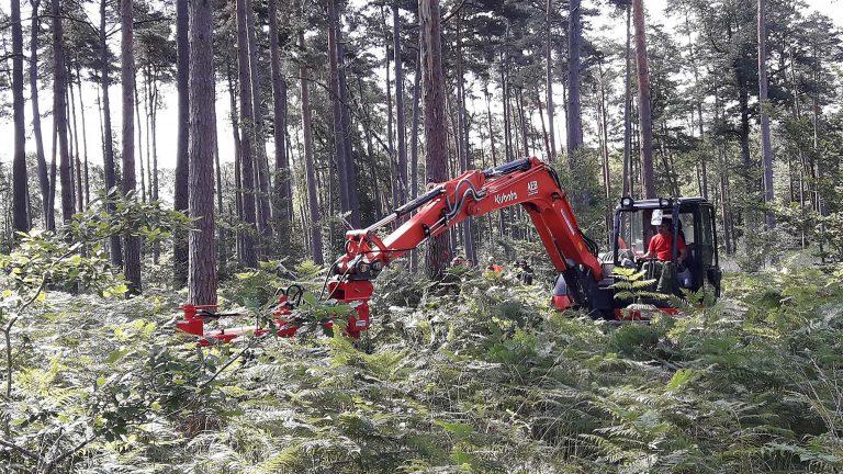 Renouvellement des forêts. Battre la fougère aigle pour soutenir les jeunes arbres