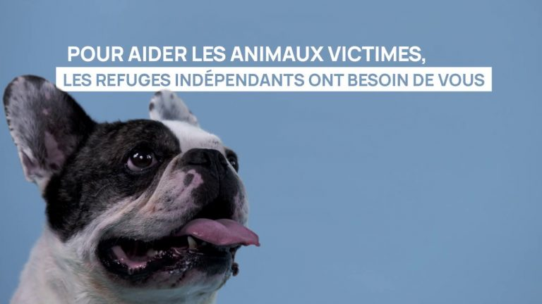 Protection Animale. 156 associations lancent un S.O.S au Ministre de l'Agriculture