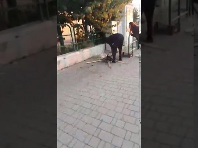 Barbarie en Italie. Un migrant fait rôtir un chaton en pleine rue (Vidéo)