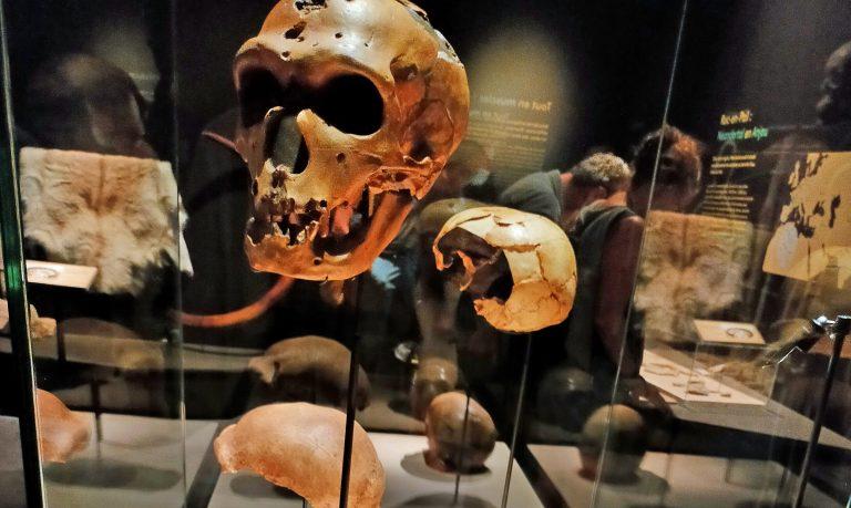 Néandertal au Muséum de Nantes