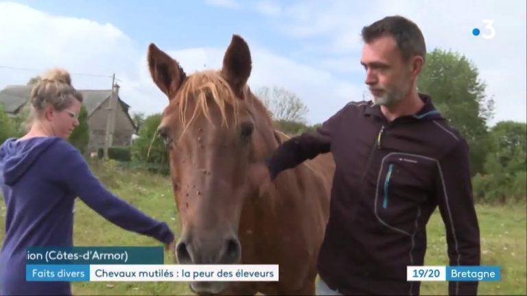 Des chevaux mutilés autour de Lannion