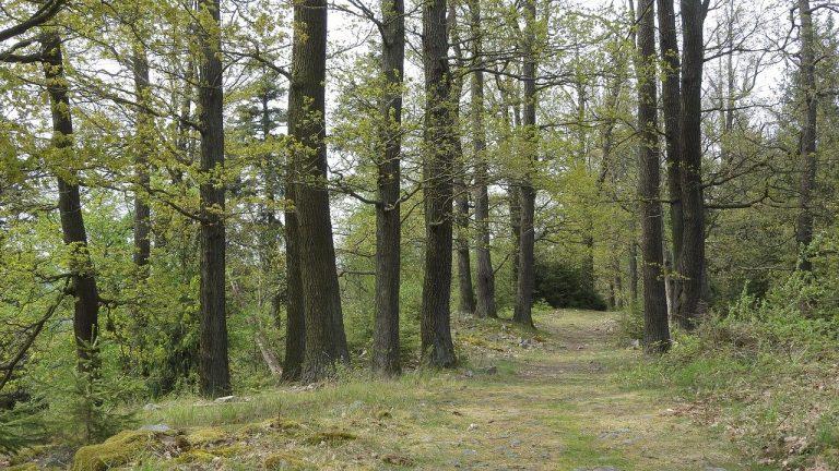 Aäsgard acquiert une forêt en Centre Bretagne