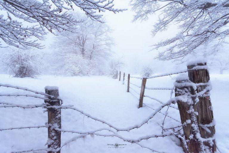 Pour célébrer le solstice d'hiver