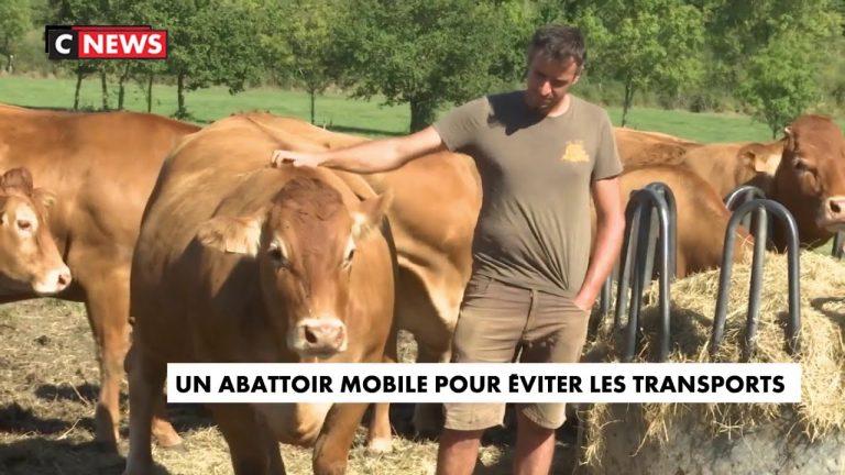 Loire-Atlantique. Un abattoir mobile pour éviter les transports d'animaux
