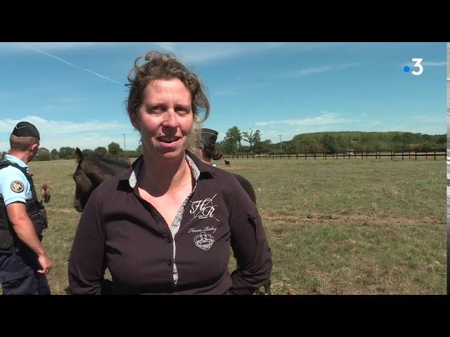 Mutilation de chevaux. Les éleveurs multiplient les mesures de protection