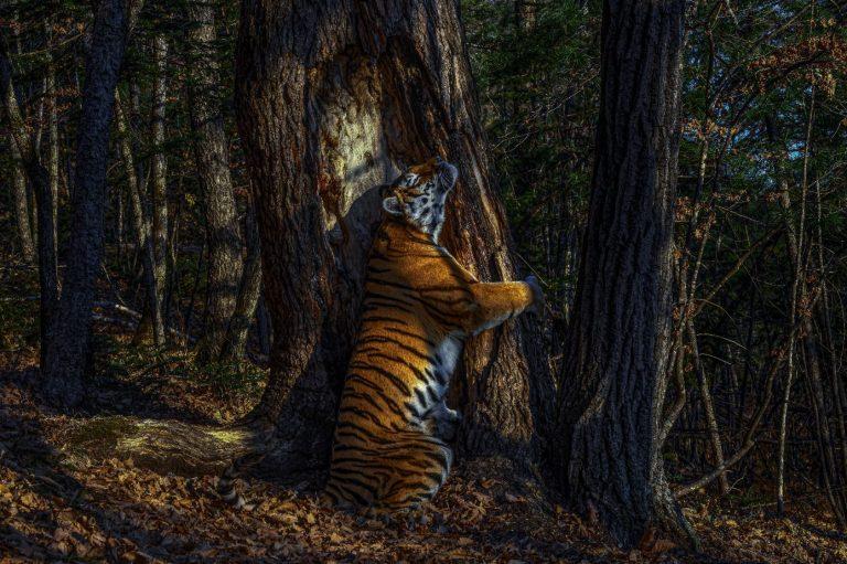 Palmarès du Wildlife Photographer of the Year 2020 : les plus belles photos de nature de l'année dévoilées