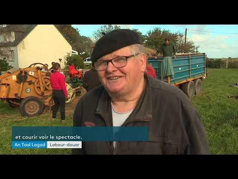 La vieille batteuse de Plouvien reprend du service pour aider de jeunes paysans