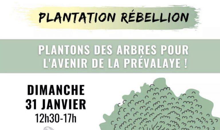 Des associations vont planter 200 arbres à Rennes pour lutter contre l'urbanisation démente